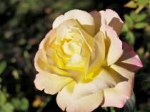 rose_201027_01