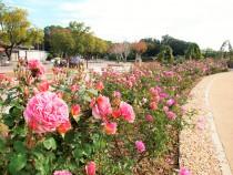 rose_201127_03