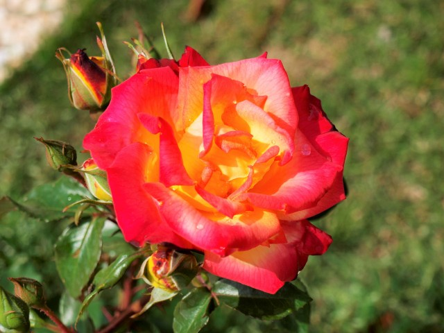 rose_210430_01