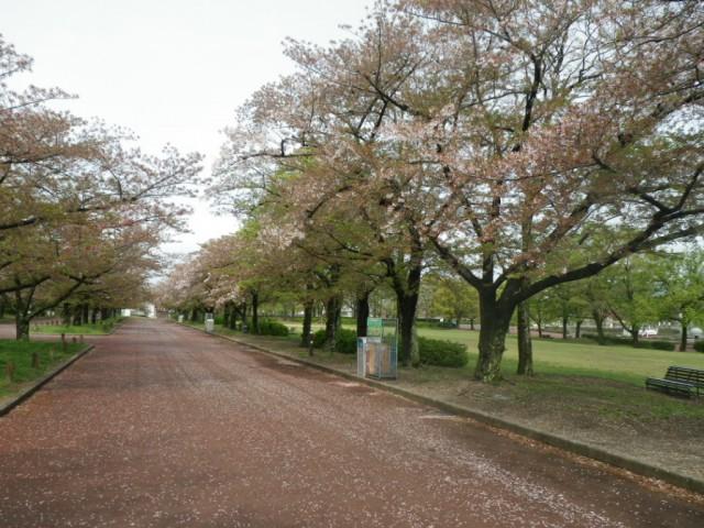 日本庭園泉