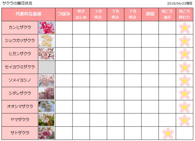 サクラの開花状況 4月23日(火曜日)現在