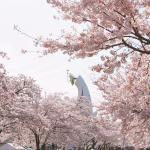 sakura_matsuri_photo2021