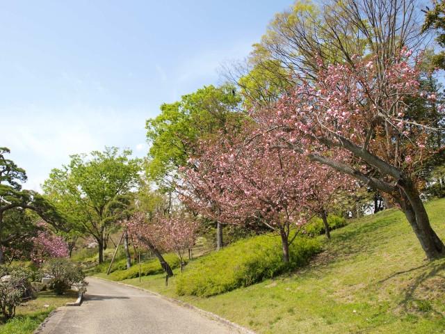 sakura_satozakura_210409_03
