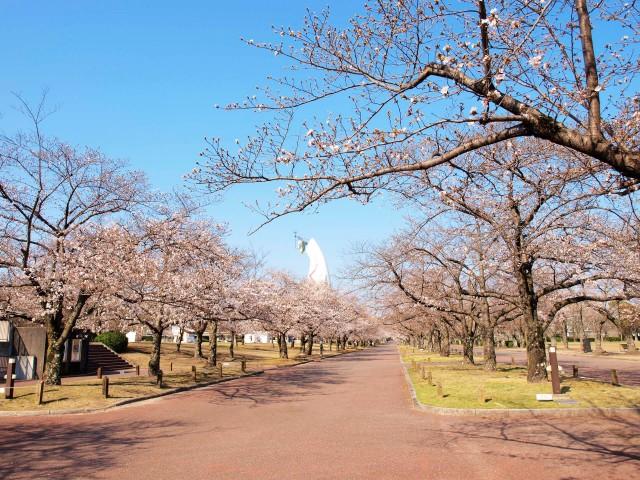 sakura_someiyoshino_210323_02