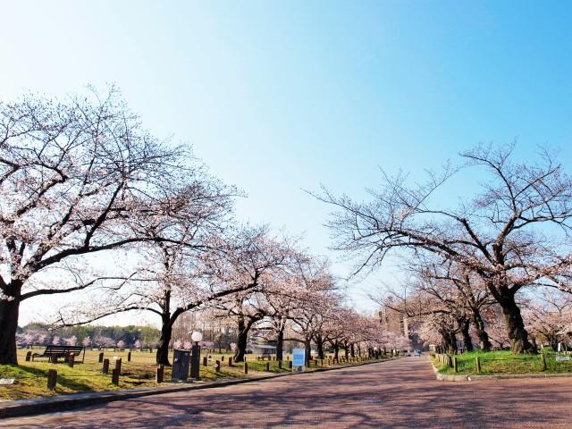 sakura_someiyoshino_210323_03