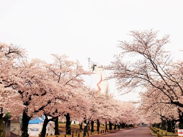 sakura_someiyoshino_210329_03