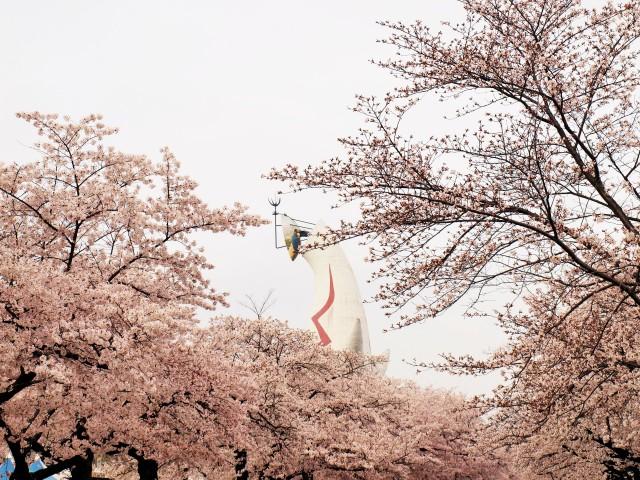sakura_someiyoshino_210330_01