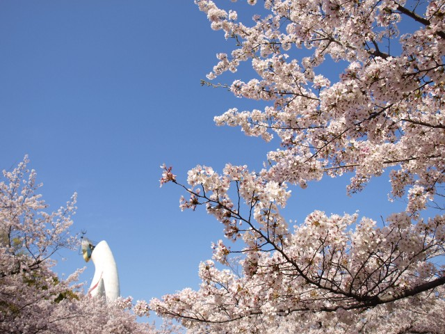 sakura_someiyoshino_210402_02