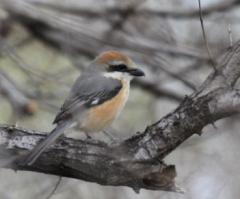 万博記念公園・自然環境セミナー①野鳥の生態・②野鳥の生育環境