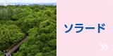 ソラード ( 森の空中観察路 )