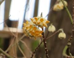 季節の植物観察ガイド⑩