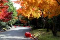 日本庭園滝紅葉1