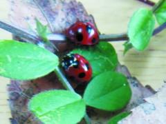 春の昆虫観察会