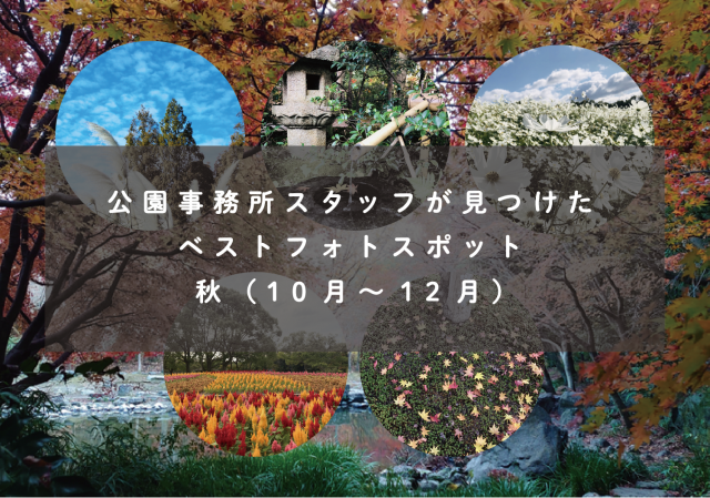 top_photospoto_autumn2020