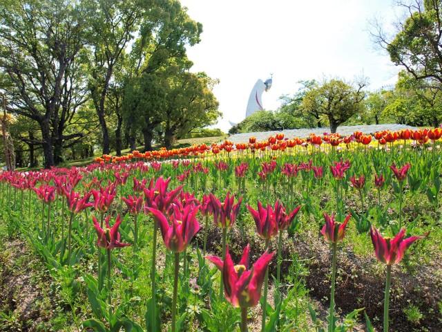 tulip_210422_01