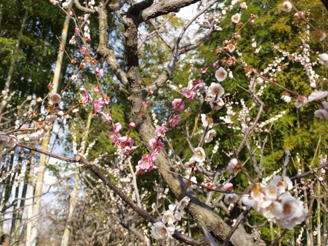 春日野(かすがの)