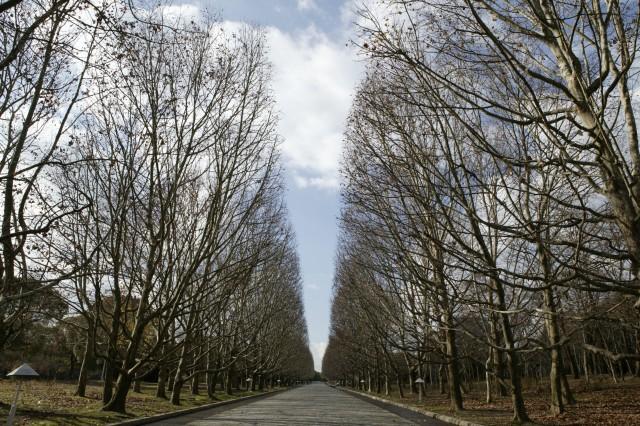 万博記念公園の「冬」