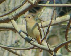 冬の野鳥観察講座