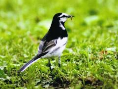 野鳥の観察会