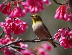 野鳥観察会-冬鳥をみよう⑤-